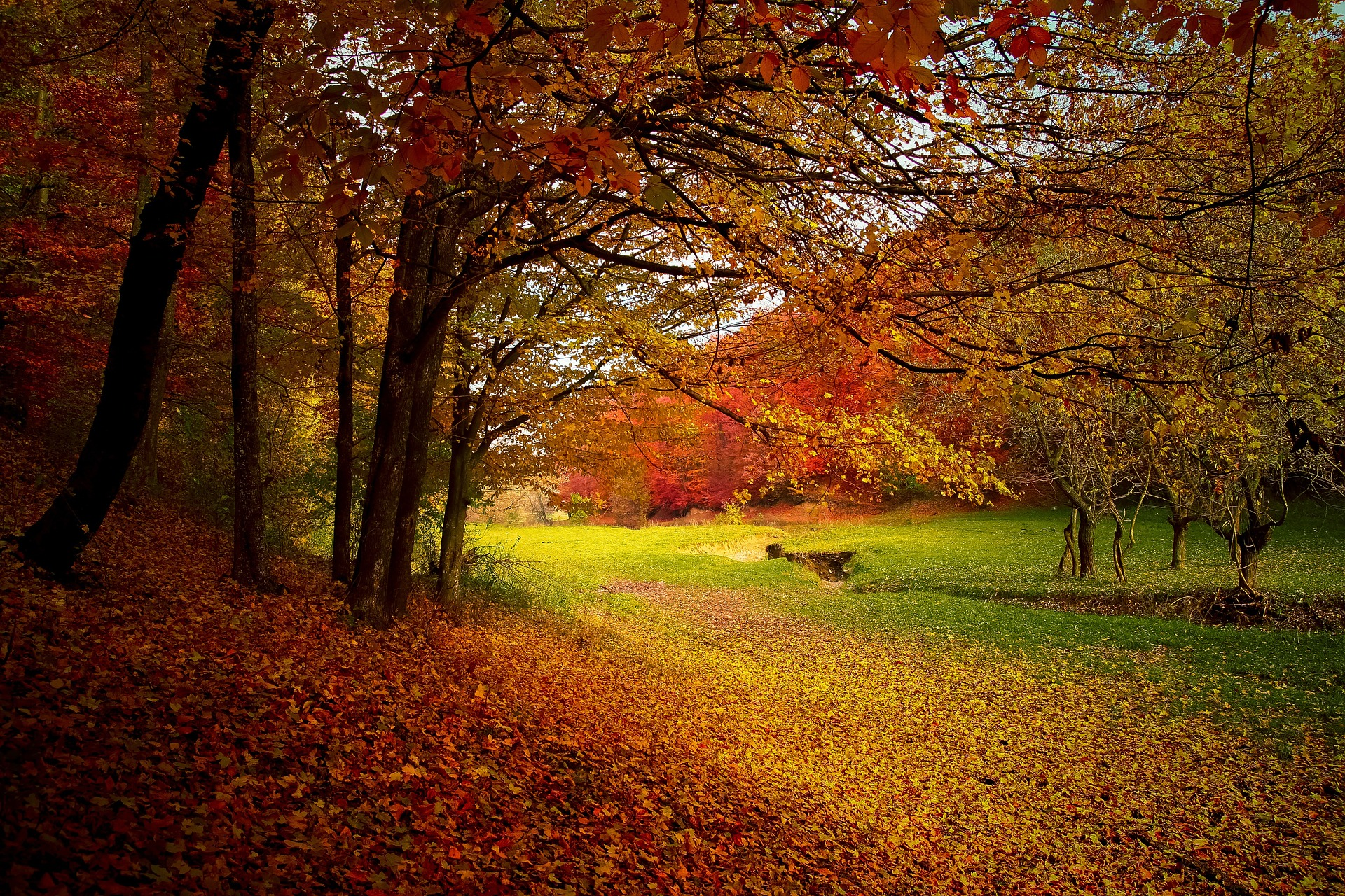 pixabay-autumn-1