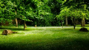 Daisy Glen, Pollock Country Park, Glasgow