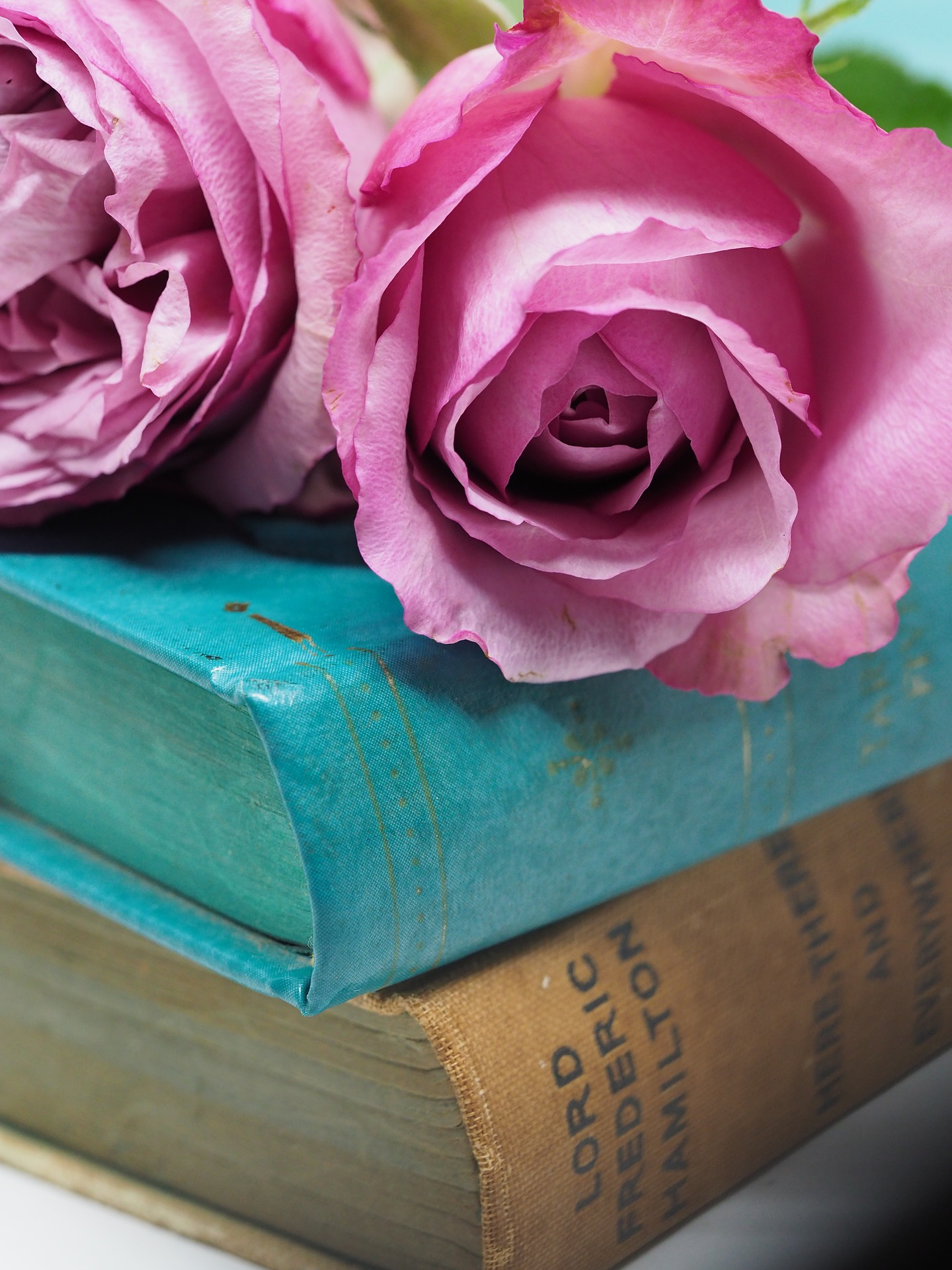 Pink Roses upon Two Books