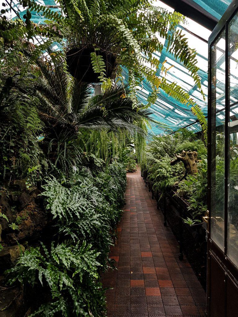 Glasgow Botanic Gardens Orchid House