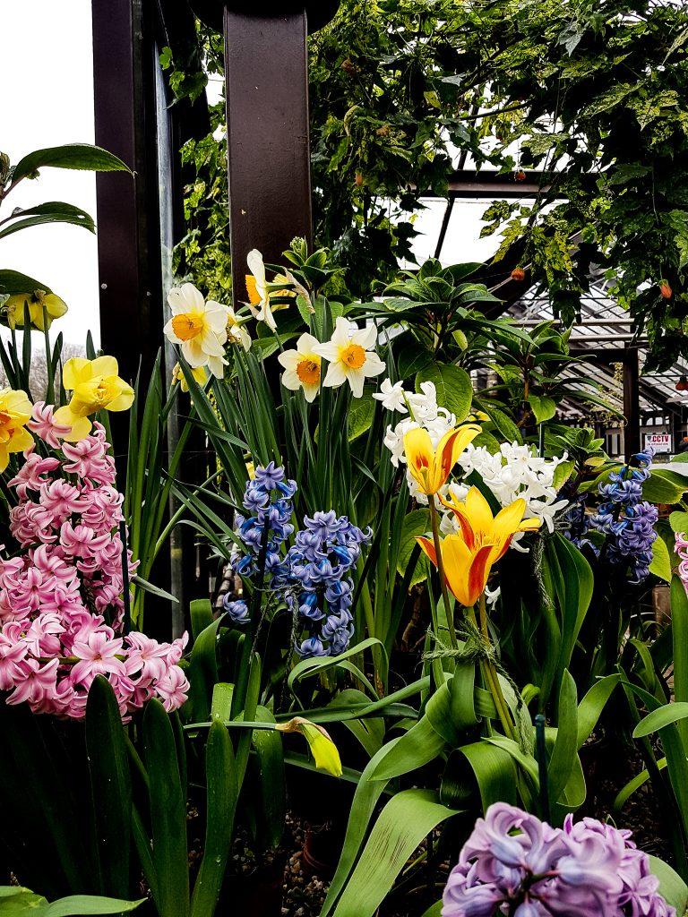Glasgow Botanic Gardens Spring Flowers
