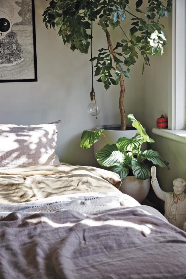 Green Plants in a Bedrom